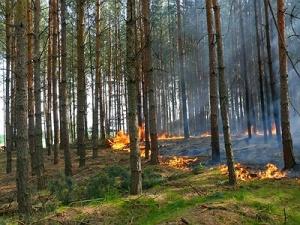 Przyczyny Pożarów Lasów w Polsce